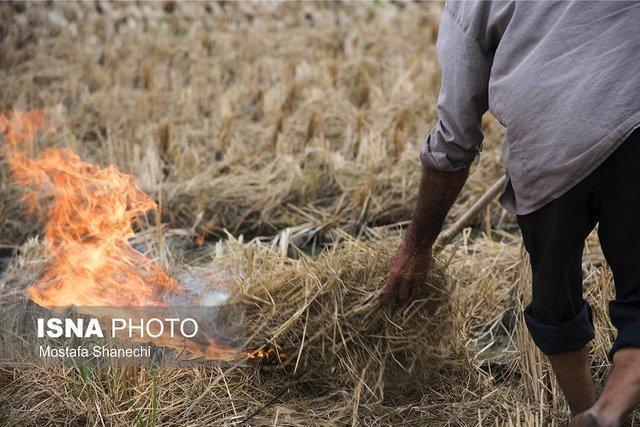 فاجعه بار شدن خاک سوزی در کشاورزی ایران + تصاویر
