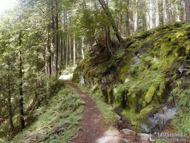 رامونا، آبشاری رویایی در دل جنگل کوهستانی