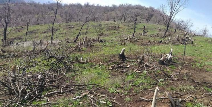 تخریب اکوسیستم و افزایش خطر همه گیری بیماری ها